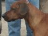 Ramakeele - Simba 12.03.05..jpg